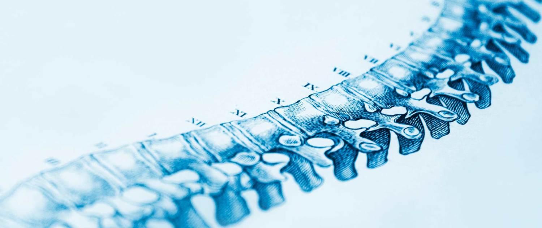 chiropratica federico distefano vitamina D schiena colonna vertebrale